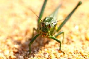 24H Noord Insectenquiz